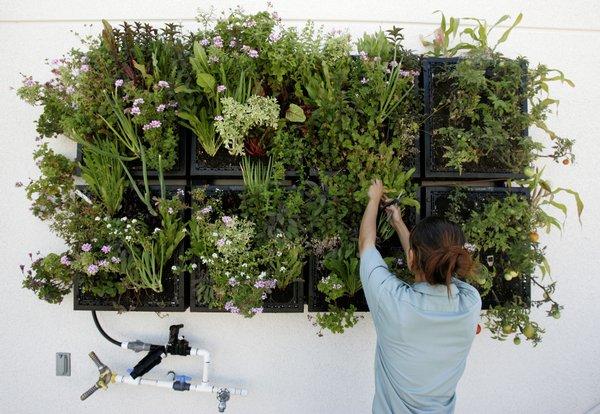 Kitchen Herb Wall